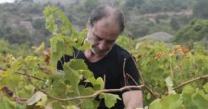 dans la vigne...